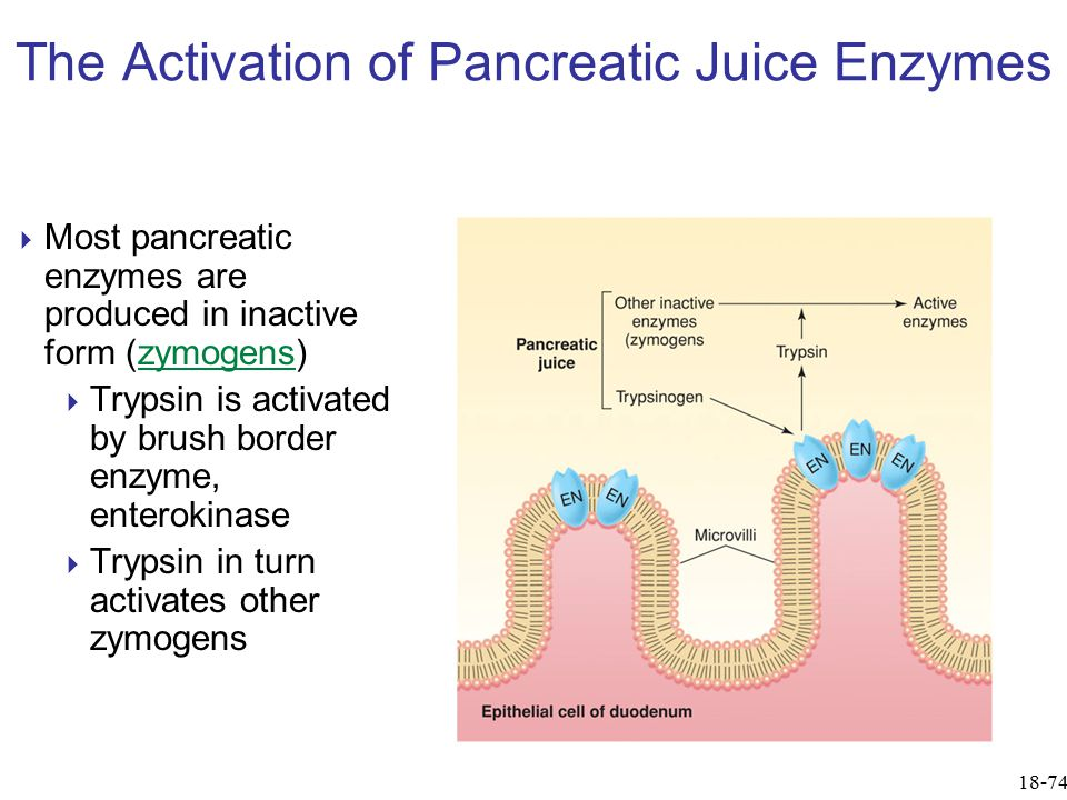 The Activation of Pancreatic Juice Enzymes