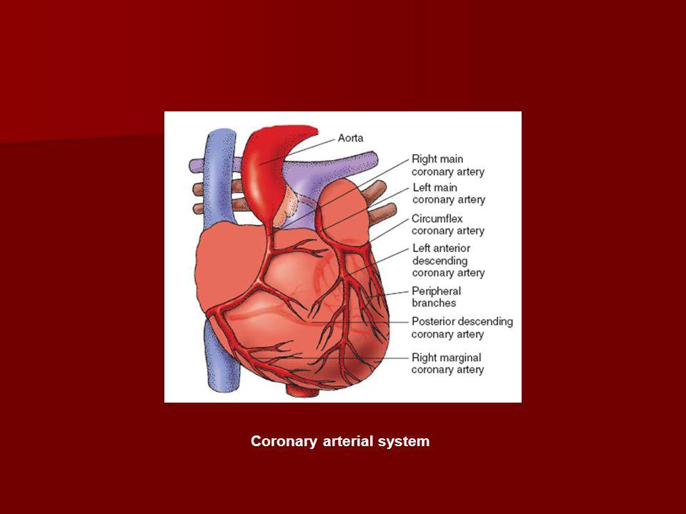 Coronary arterial system
