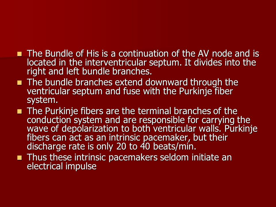 The Bundle of His is a continuation of the AV node and is located in the interventricular septum. It divides into the right and left bundle branches.