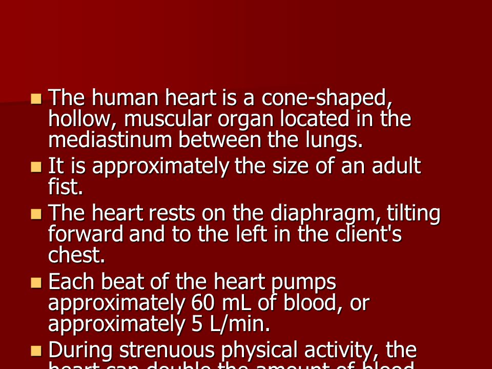 The human heart is a cone-shaped, hollow, muscular organ located in the mediastinum between the lungs.