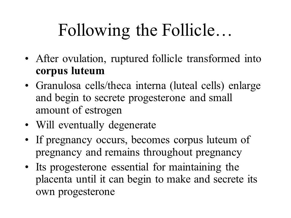 Following the Follicle…
