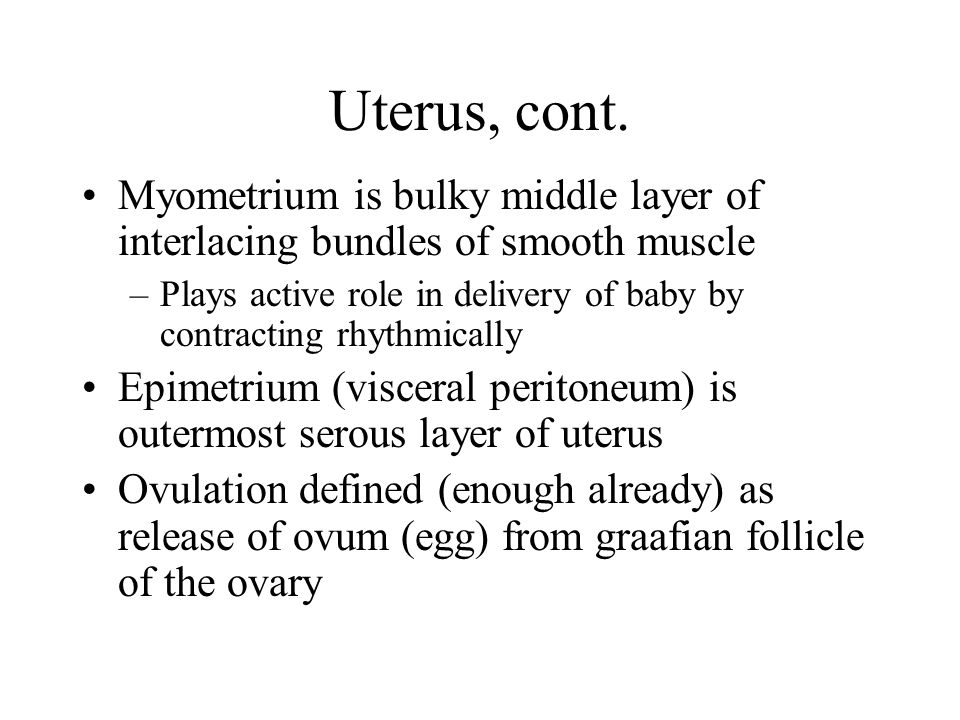 Uterus, cont. Myometrium is bulky middle layer of interlacing bundles of smooth muscle.