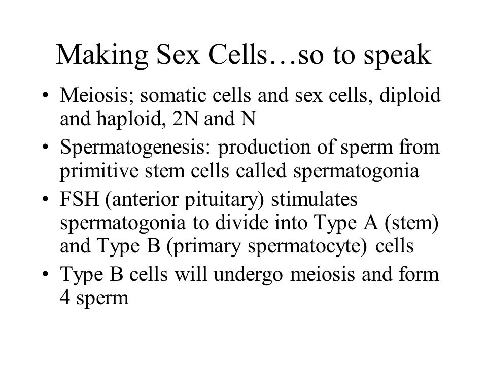 Making Sex Cells…so to speak