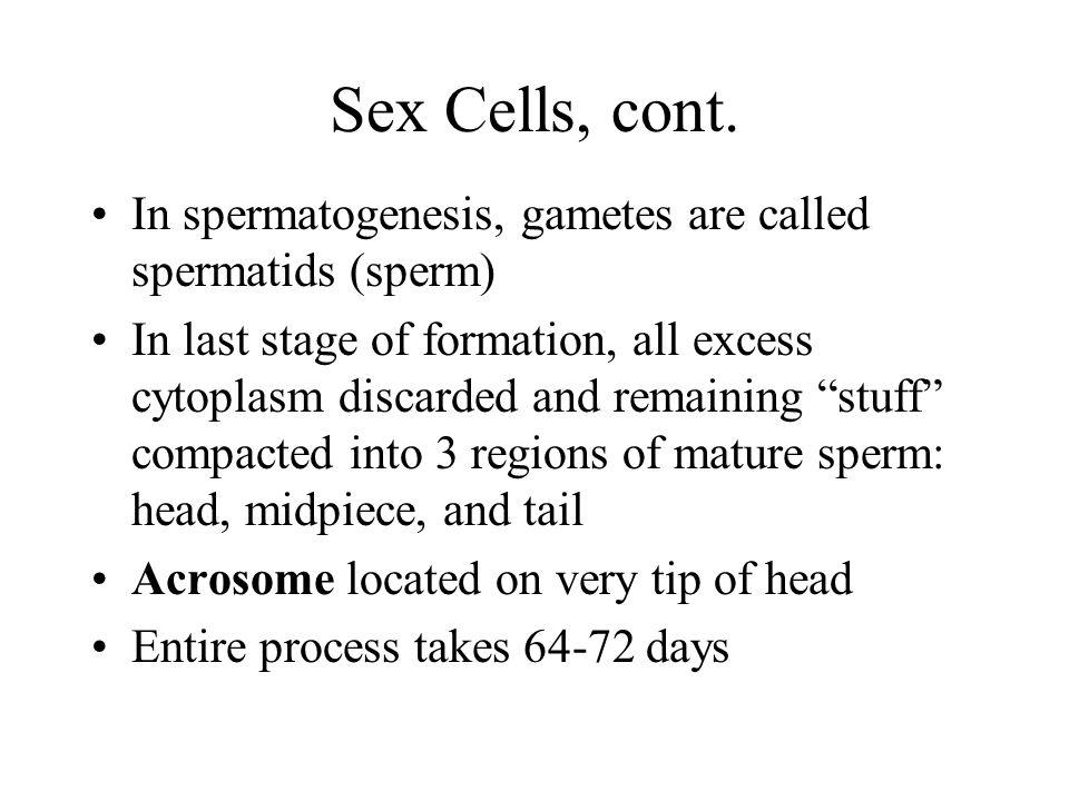 Sex Cells, cont. In spermatogenesis, gametes are called spermatids (sperm)