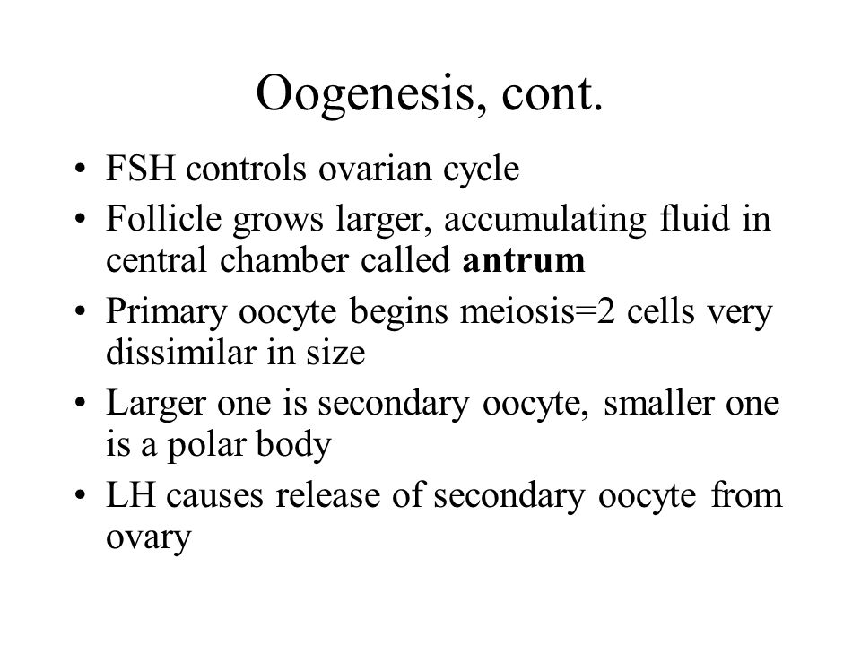 Oogenesis, cont. FSH controls ovarian cycle
