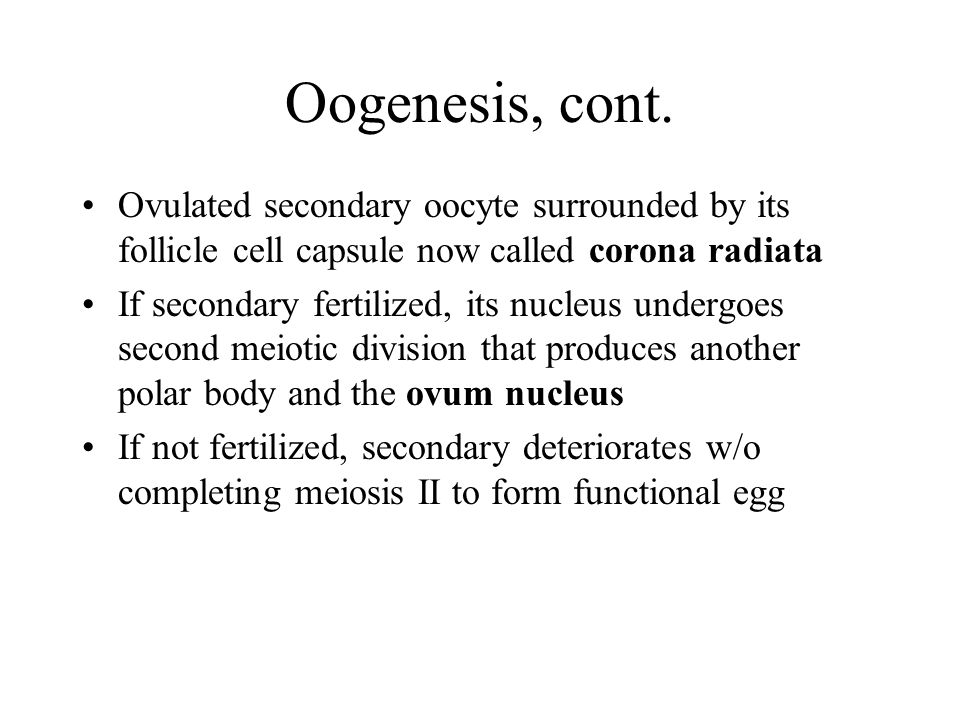 Oogenesis, cont. Ovulated secondary oocyte surrounded by its follicle cell capsule now called corona radiata.