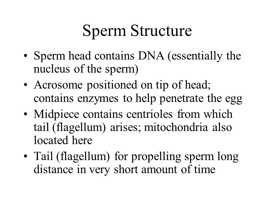 Sperm Structure Sperm head contains DNA (essentially the nucleus of the sperm)