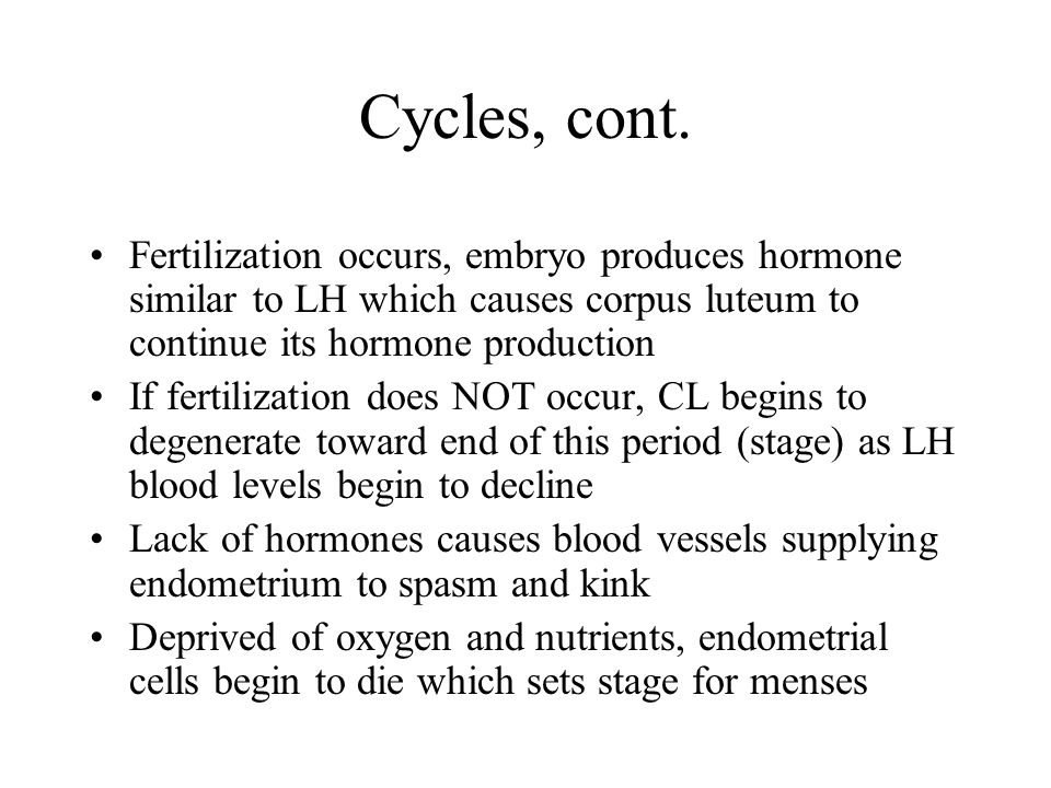 Cycles, cont. Fertilization occurs, embryo produces hormone similar to LH which causes corpus luteum to continue its hormone production.