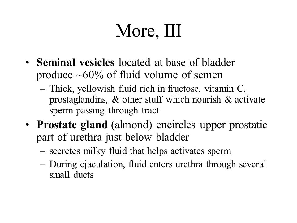 More, III Seminal vesicles located at base of bladder produce ~60% of fluid volume of semen.
