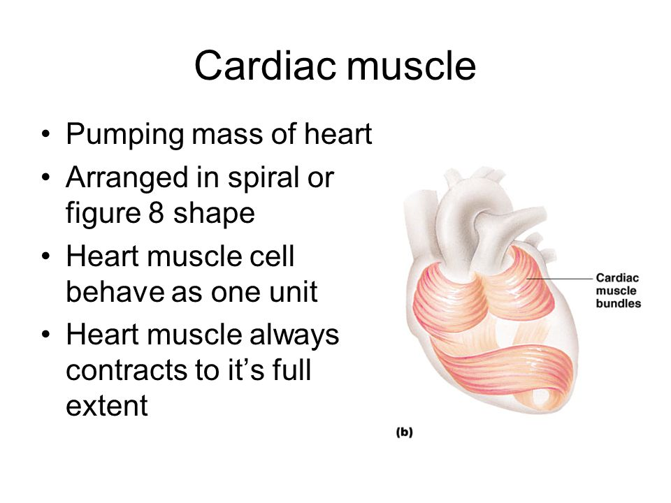 Cardiac muscle Pumping mass of heart