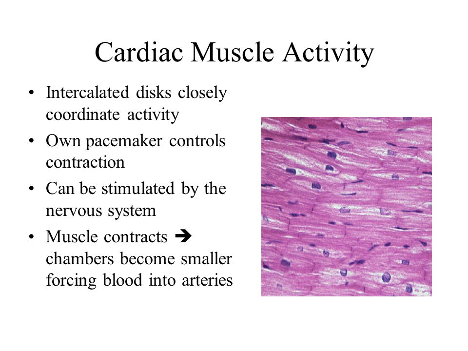 Cardiac Muscle Activity