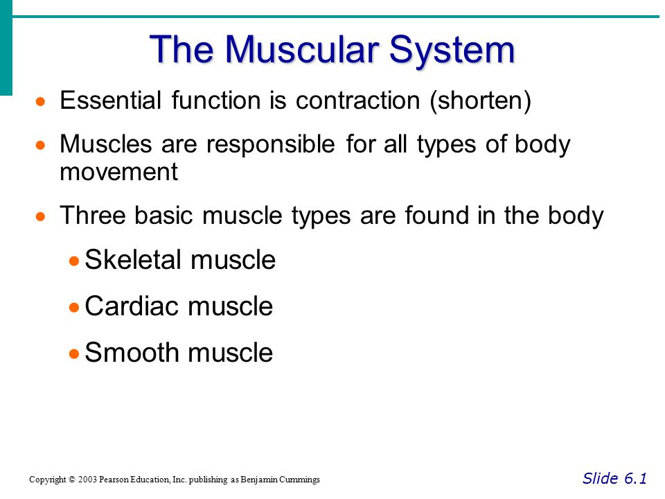 The Muscular System Skeletal muscle Cardiac muscle Smooth muscle
