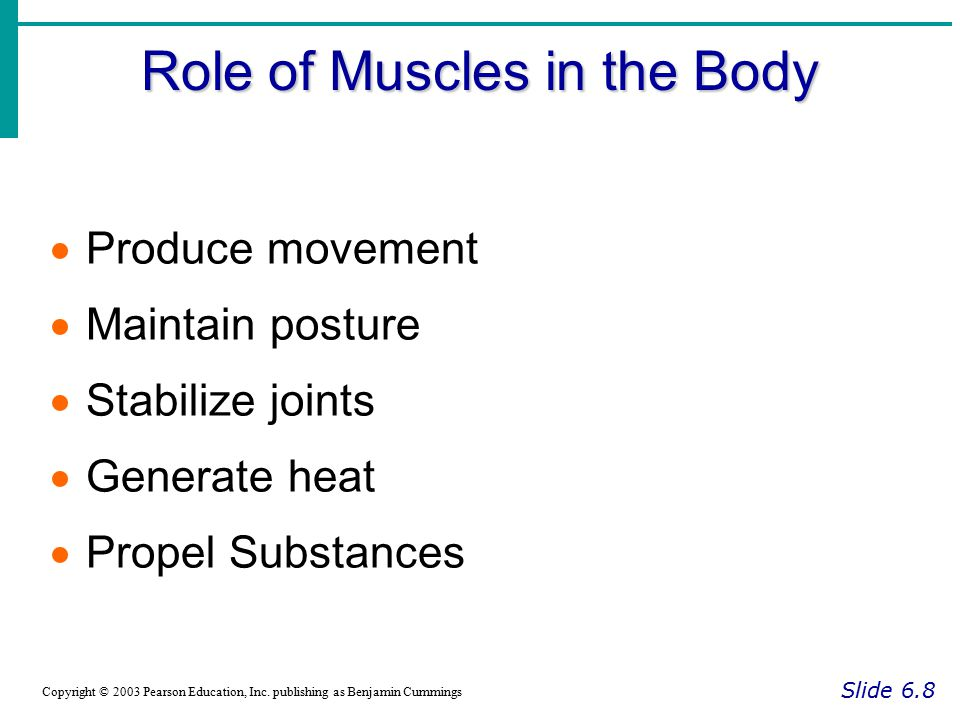 Role of Muscles in the Body