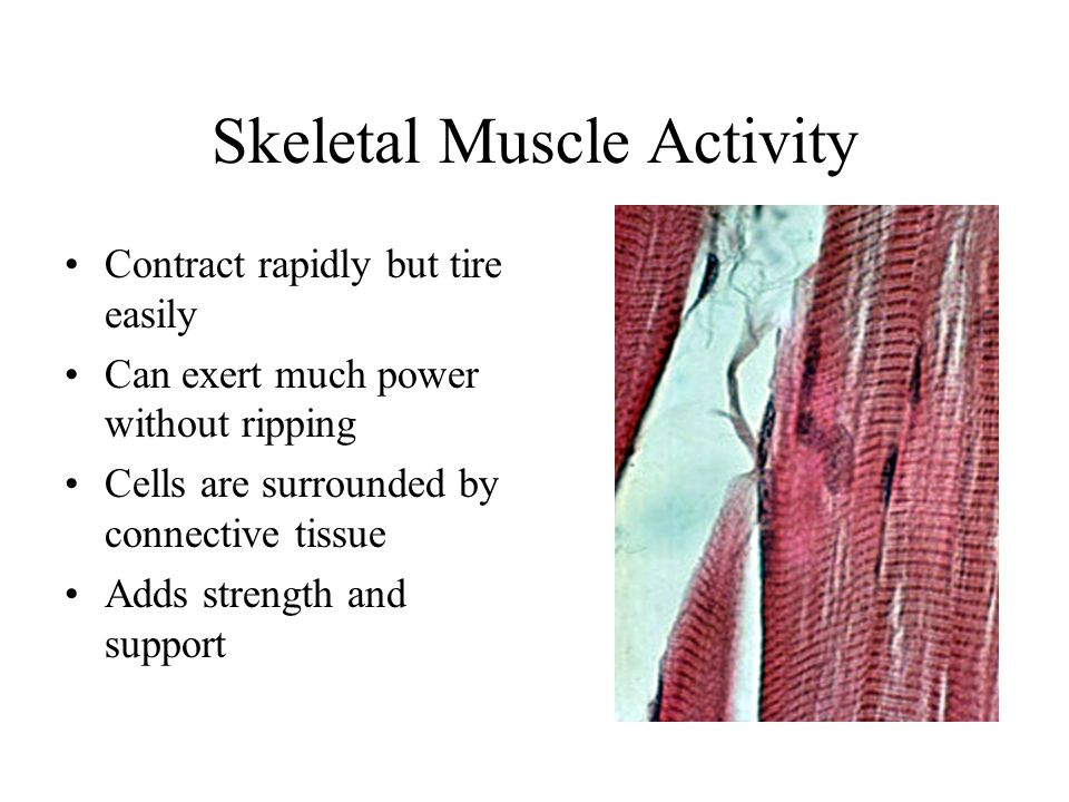 Skeletal Muscle Activity