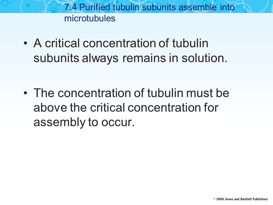 7.4 Purified tubulin subunits assemble into microtubules