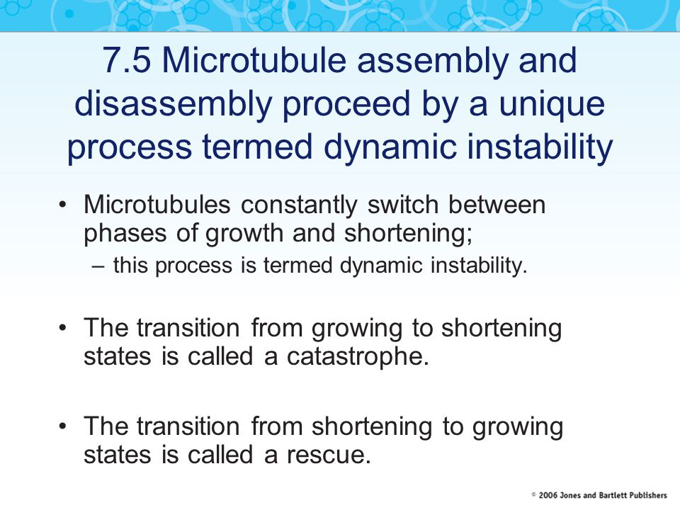 7.5 Microtubule assembly and disassembly proceed by a unique process termed dynamic instability
