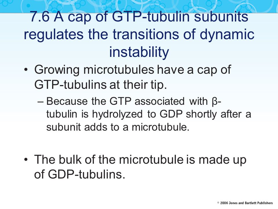 7.6 A cap of GTP-tubulin subunits regulates the transitions of dynamic instability