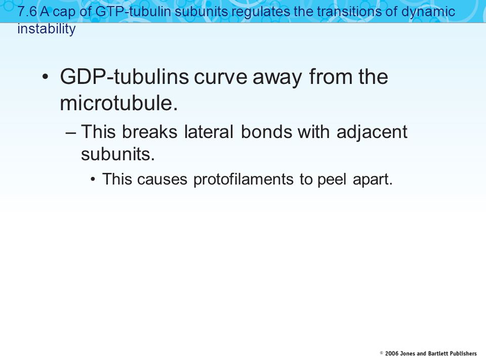 GDP-tubulins curve away from the microtubule.