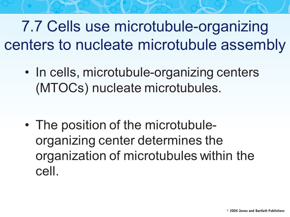 7.7 Cells use microtubule-organizing centers to nucleate microtubule assembly