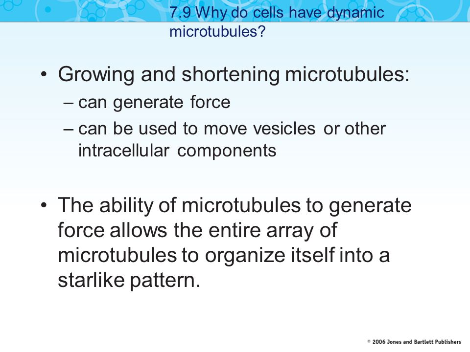 Growing and shortening microtubules: