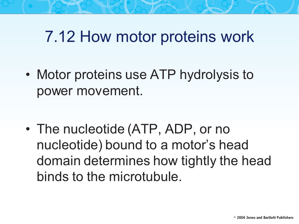 7.12 How motor proteins work