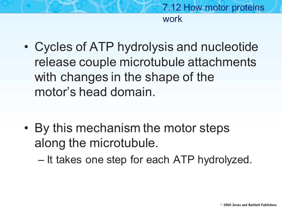 By this mechanism the motor steps along the microtubule.