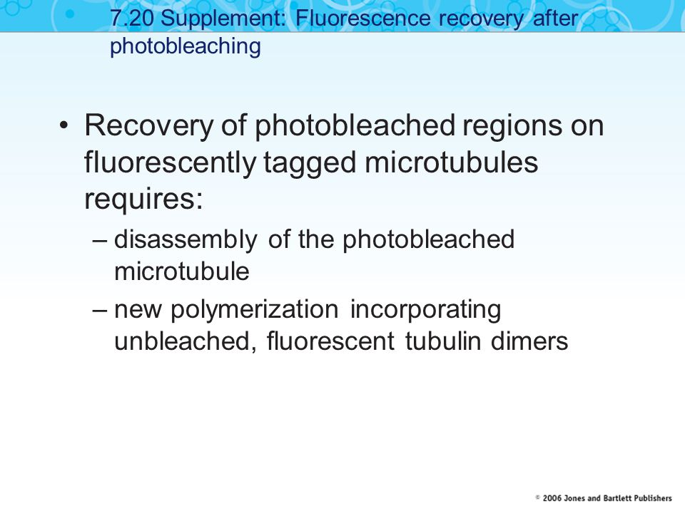 7.20 Supplement: Fluorescence recovery after photobleaching