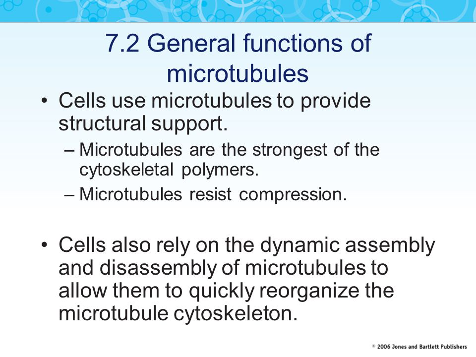 7.2 General functions of microtubules