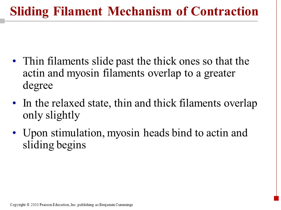 Sliding Filament Mechanism of Contraction