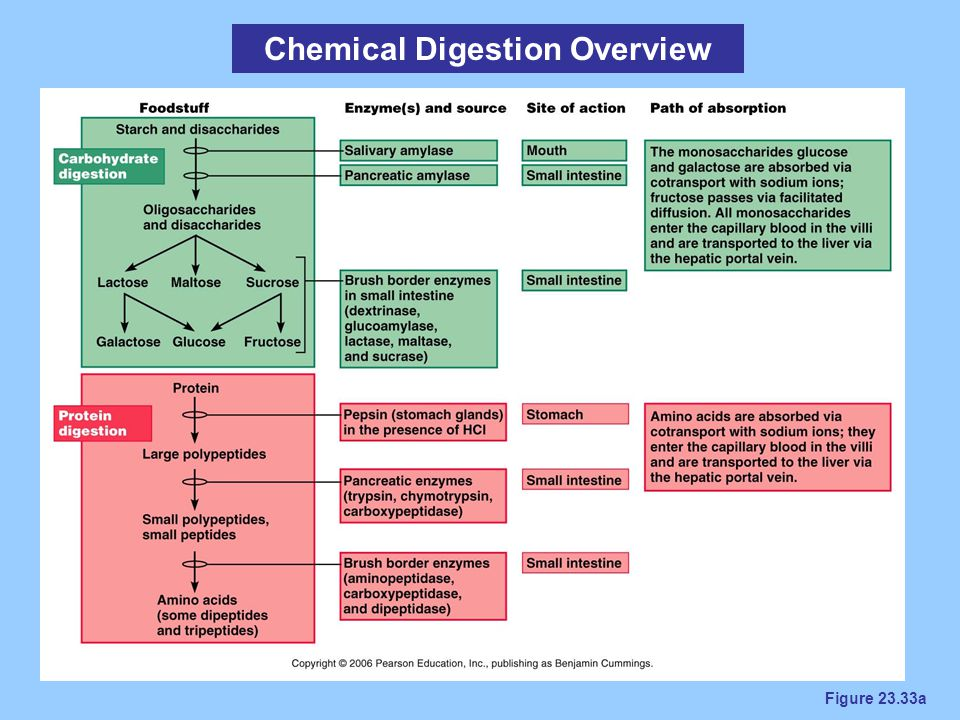 Chemical Digestion Overview