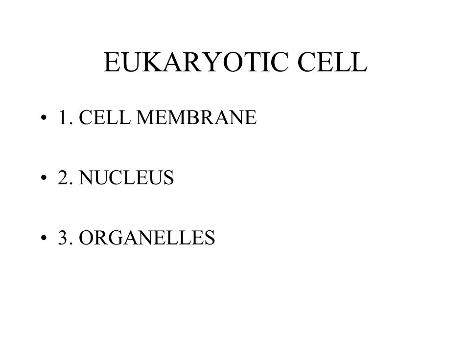 EUKARYOTIC CELL 1. CELL MEMBRANE 2. NUCLEUS 3. ORGANELLES