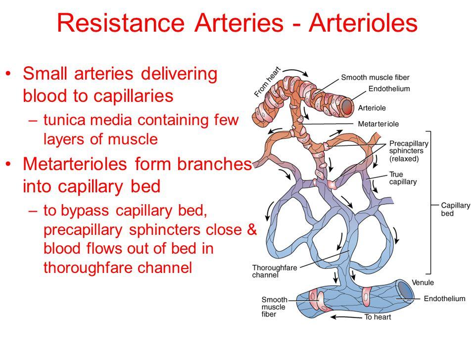 Resistance Arteries - Arterioles