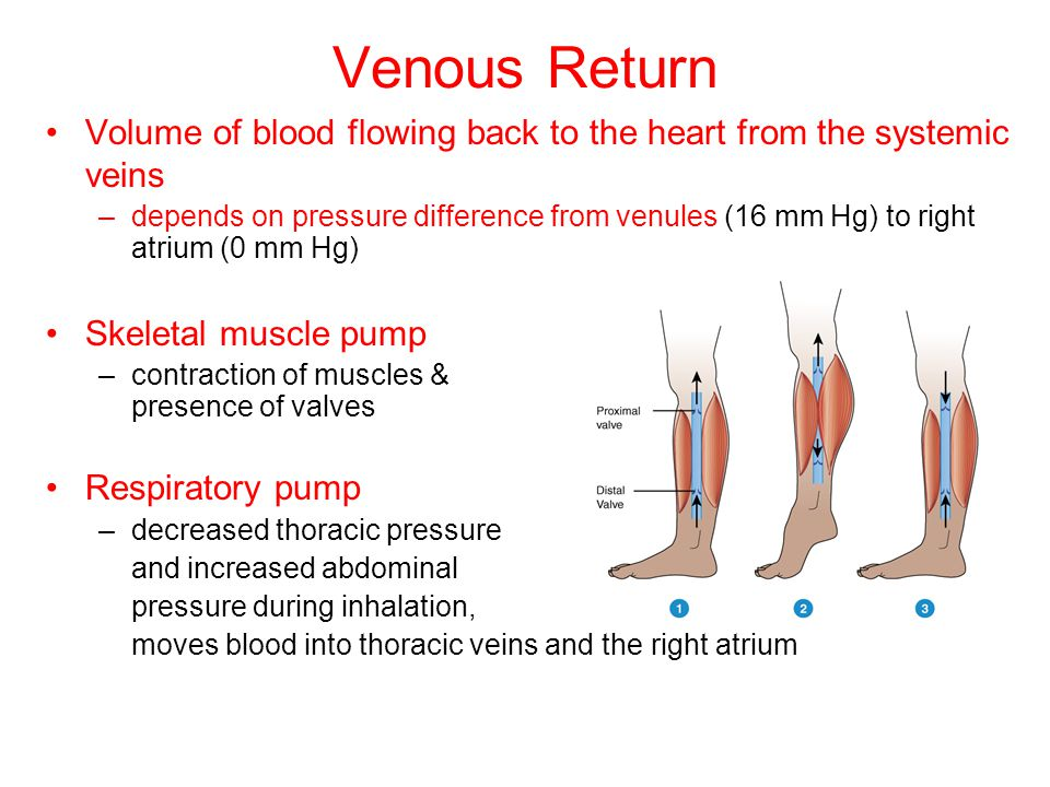 Venous Return Volume of blood flowing back to the heart from the systemic veins.