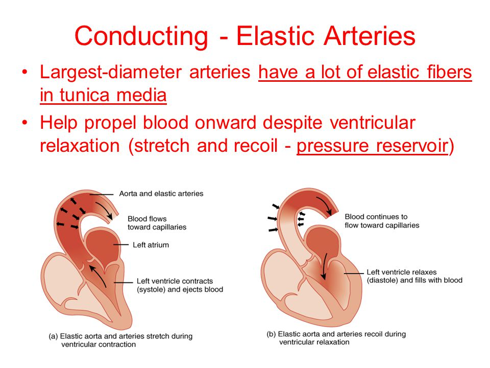 Conducting - Elastic Arteries