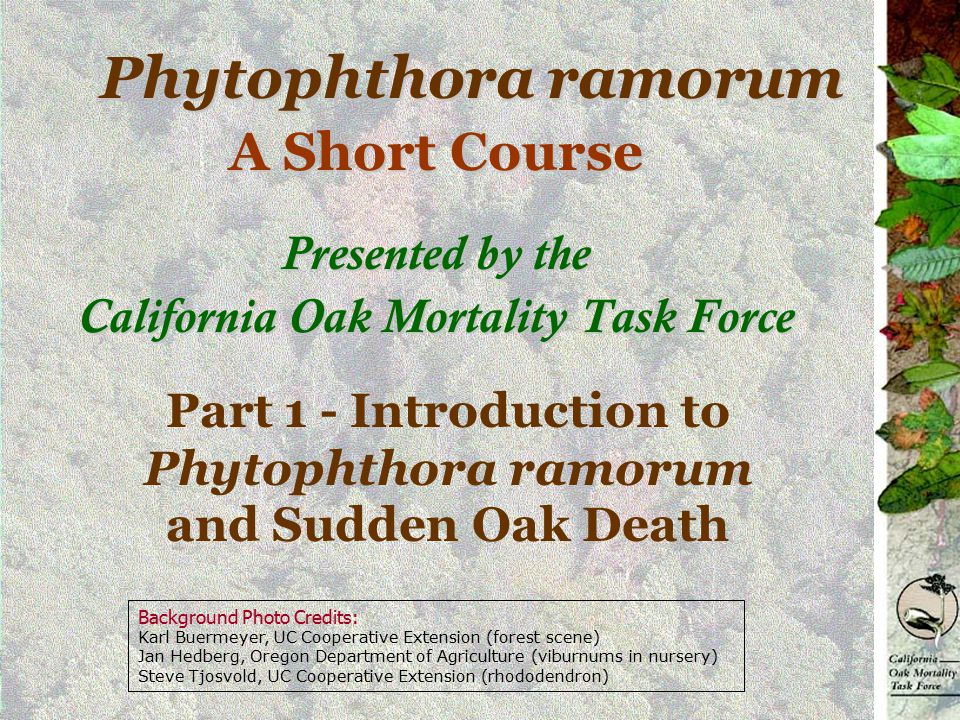A Short Course Presented by the California Oak Mortality Task Force