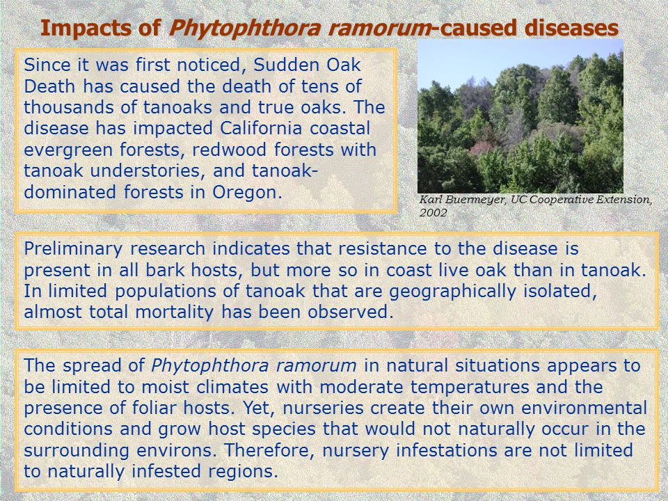 Impacts of Phytophthora ramorum-caused diseases