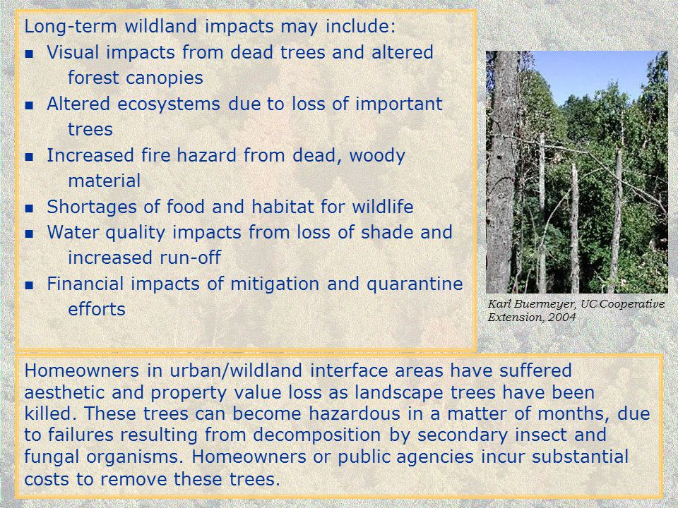 Long-term wildland impacts may include: