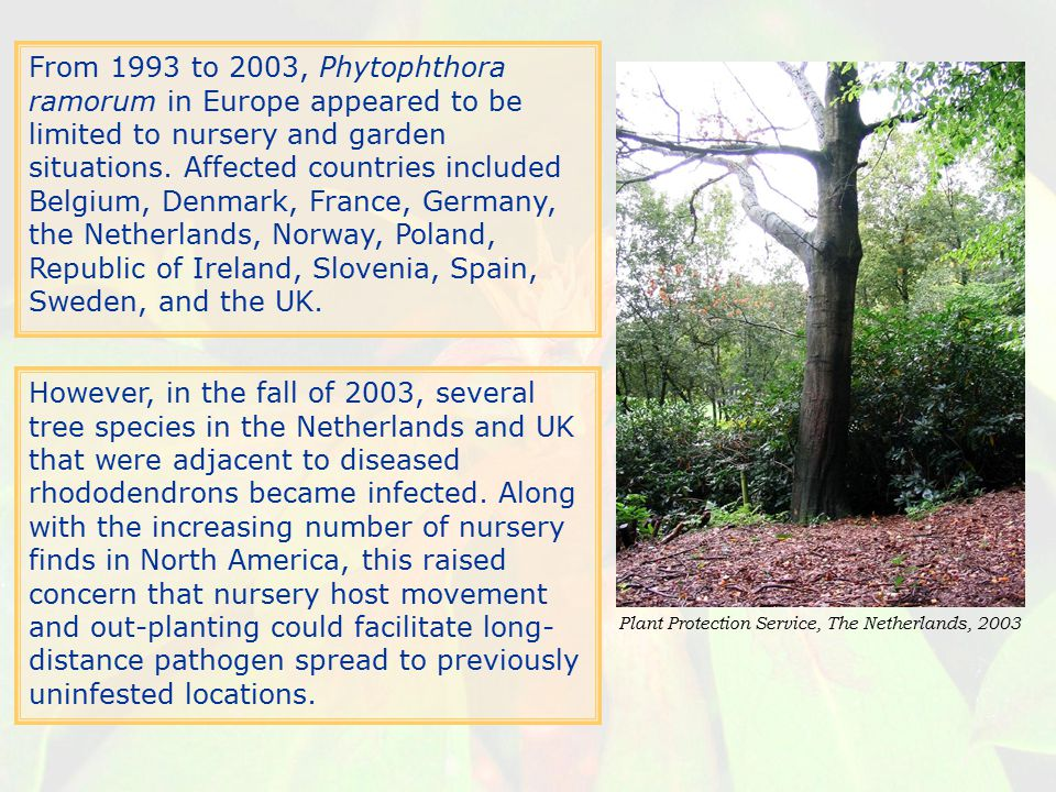 From 1993 to 2003, Phytophthora ramorum in Europe appeared to be limited to nursery and garden situations. Affected countries included Belgium, Denmark, France, Germany, the Netherlands, Norway, Poland, Republic of Ireland, Slovenia, Spain, Sweden, and the UK.
