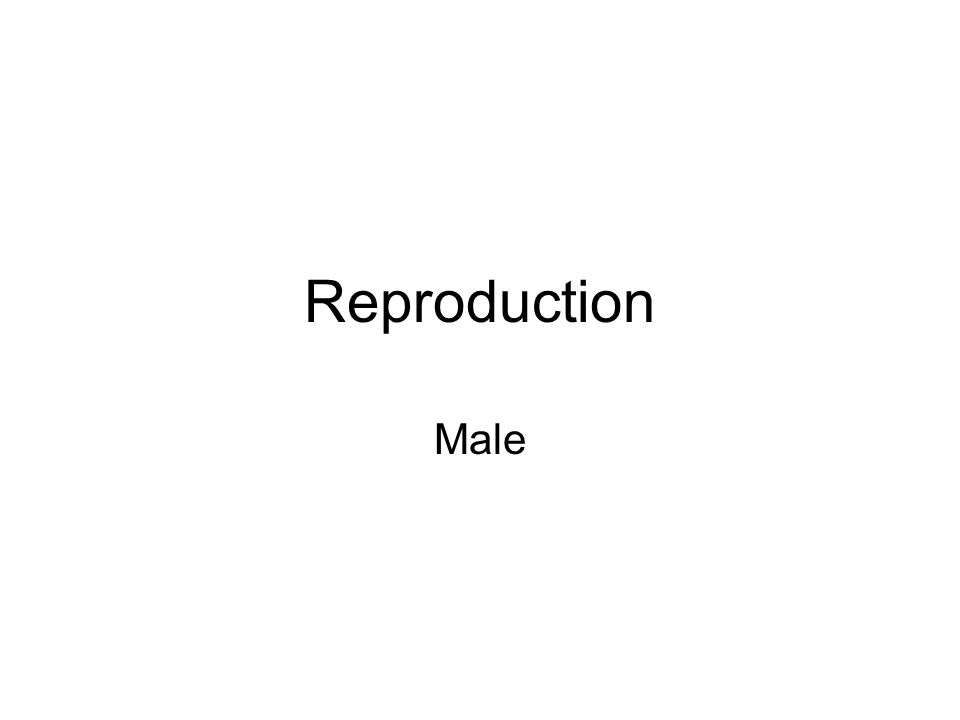 Reproduction Male