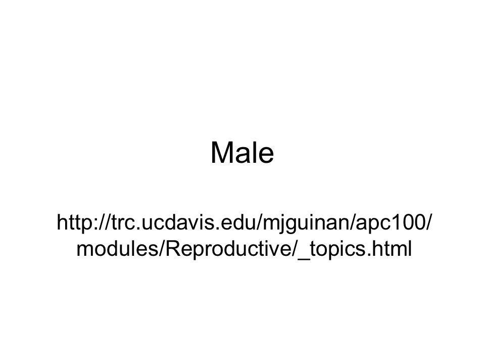 Male http://trc.ucdavis.edu/mjguinan/apc100/modules/Reproductive/_topics.html