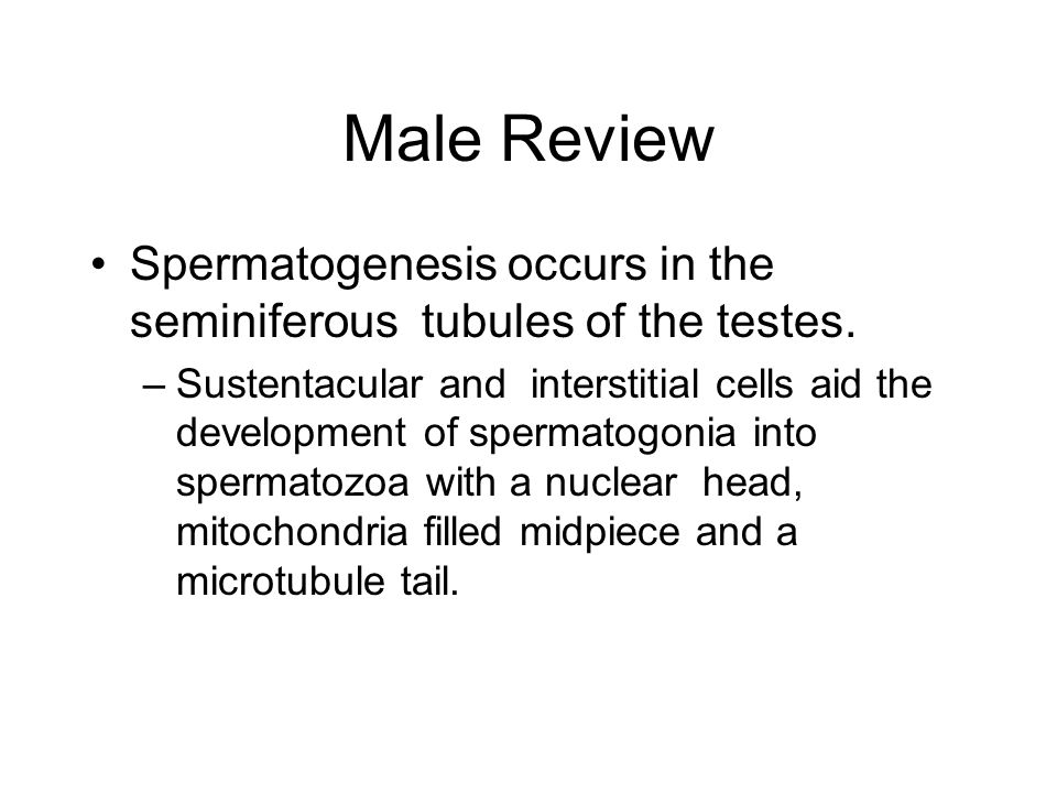 Male Review Spermatogenesis occurs in the seminiferous tubules of the testes.