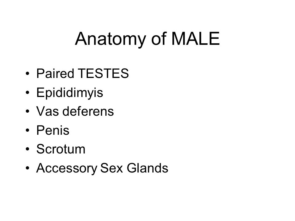 Anatomy of MALE Paired TESTES Epididimyis Vas deferens Penis Scrotum