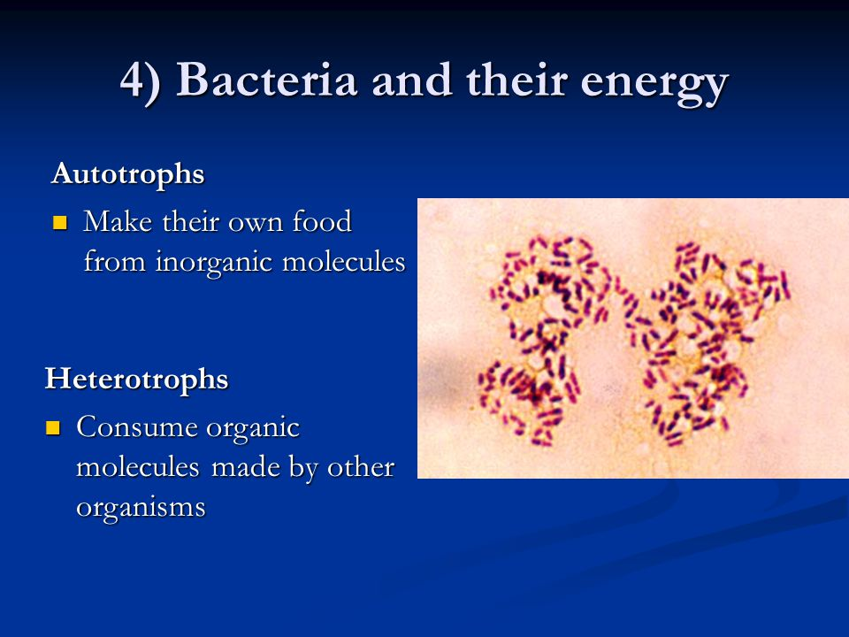 4) Bacteria and their energy