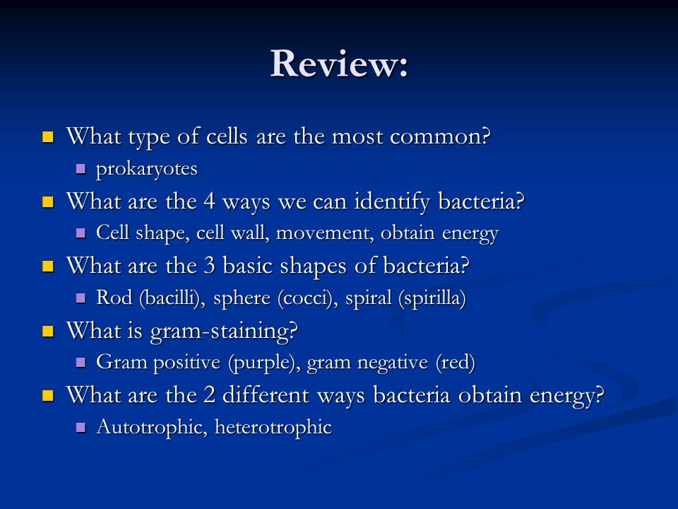 Review: What type of cells are the most common