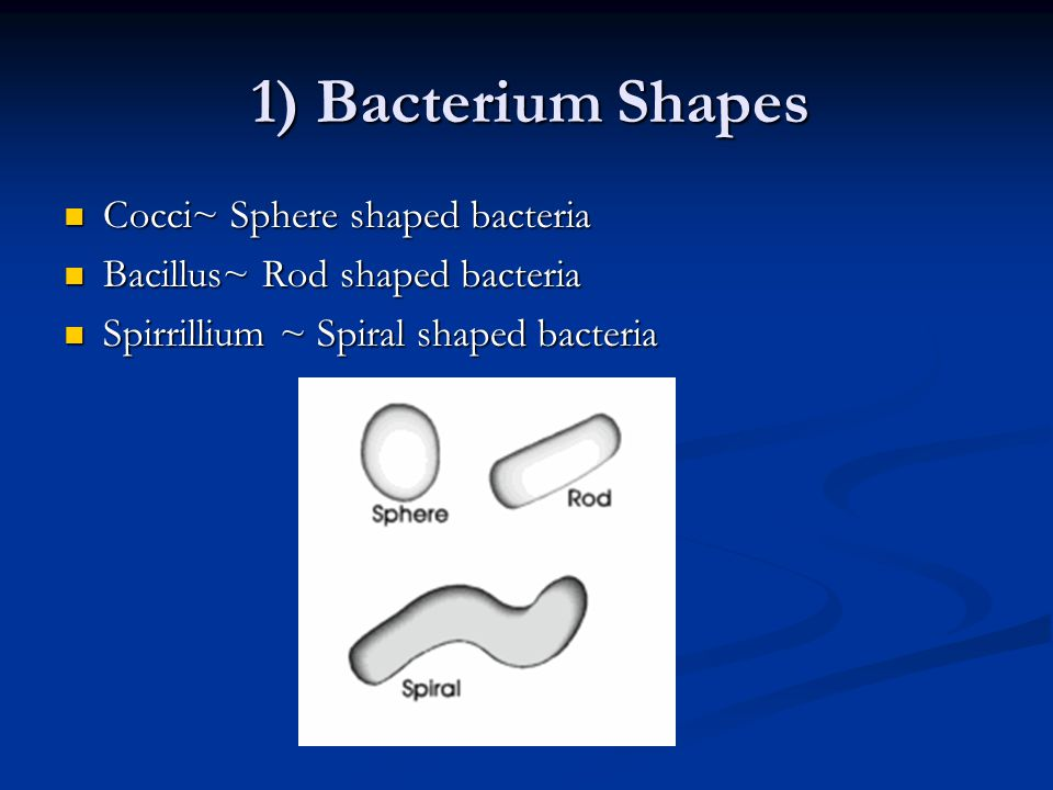 1) Bacterium Shapes Cocci~ Sphere shaped bacteria