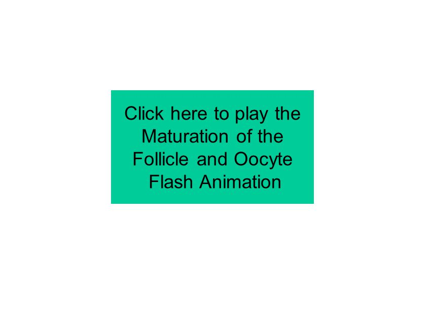 Click here to play the Maturation of the Follicle and Oocyte Flash Animation