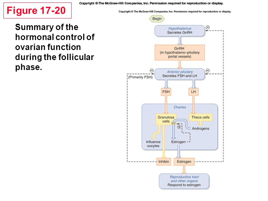 Figure 17-20 Summary of the hormonal control of