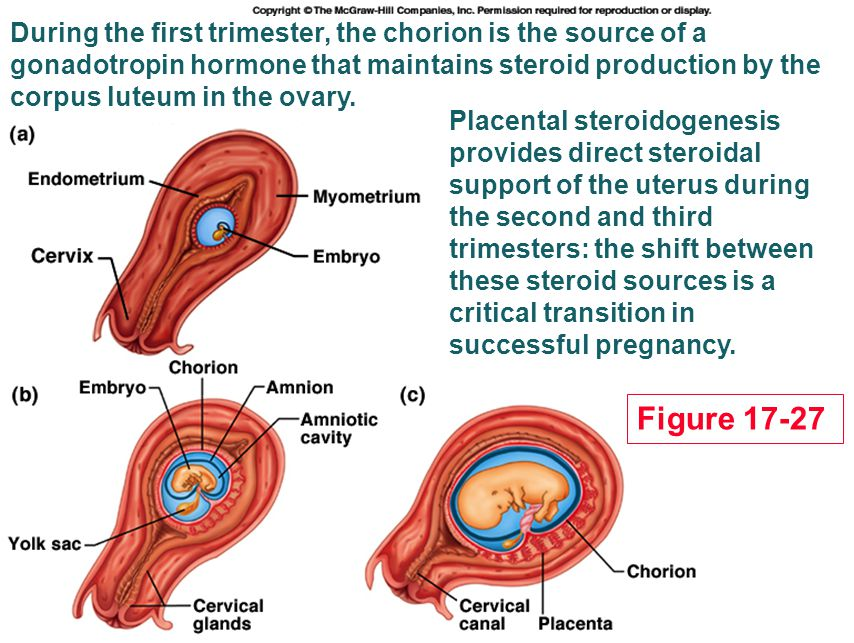 During the first trimester, the chorion is the source of a