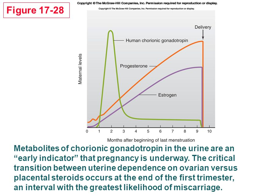 Figure 17-28 Metabolites of chorionic gonadotropin in the urine are an