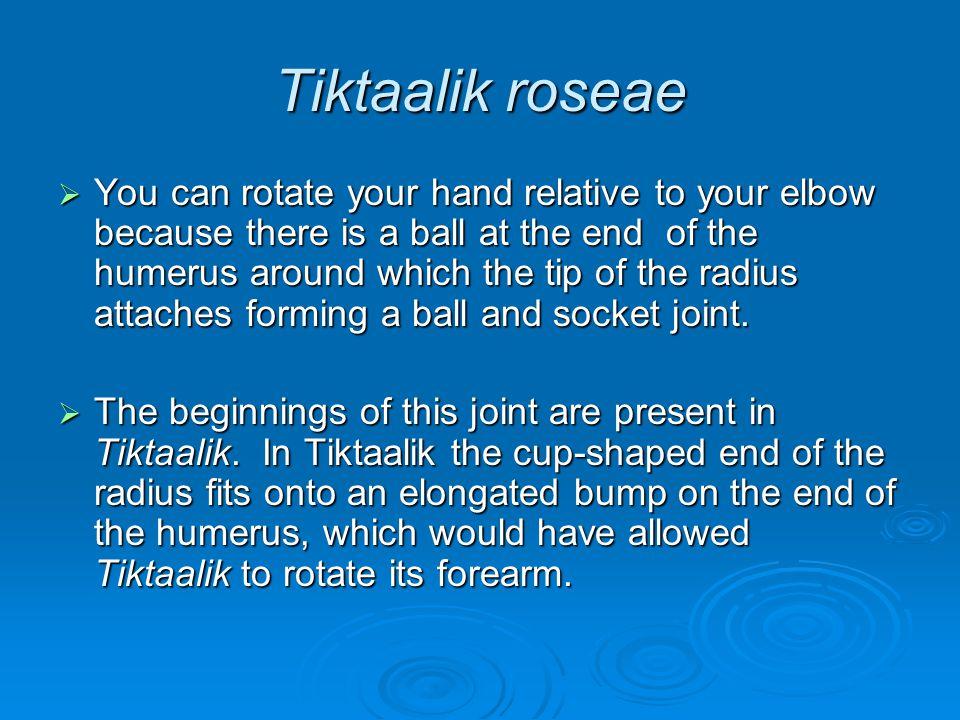 Tiktaalik roseae